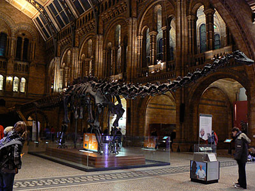 Diplodocus du hall du musée