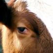 Visitez une ferme en plein cœur de Londres !