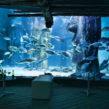 Gros plan sur les aquariums de Londres