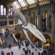 Focus sur le musée d'Histoire Naturelle de Londres