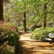 Découvrez Richmond Park, un lieu dépaysant de Londres